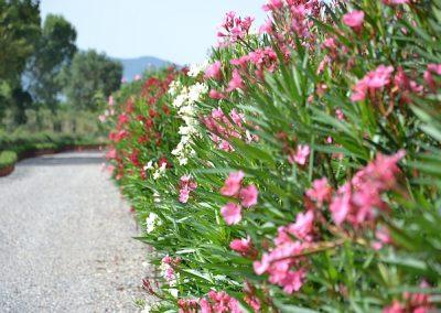 foto-panoramiche-merlo-agosto-2011-1586