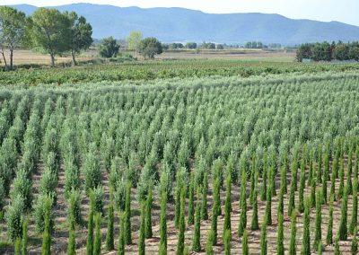 foto-panoramiche-merlo-agosto-2011-1257