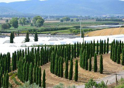 foto-panoramiche-merlo-agosto-2011-1632