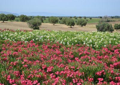 foto-panoramiche-merlo-agosto-2011-1914